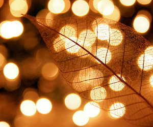 bokeh, gold, and leaf image