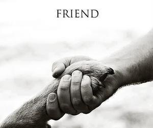 friends, dog, and animal image