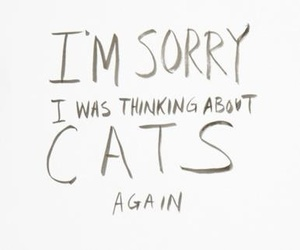 cats, quote, and meow image