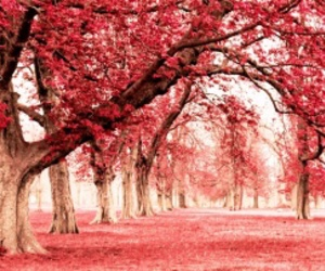 beautiful, park, and pink image