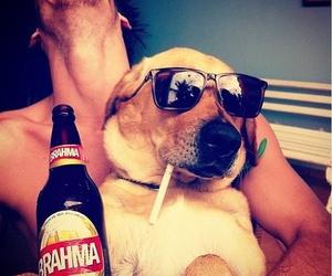 dog, boy, and beer image