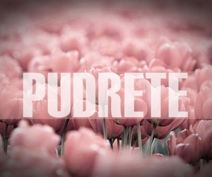 love, frases, and pudrete image