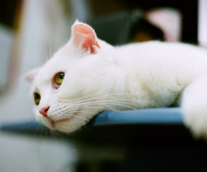 cat, film, and kittens image