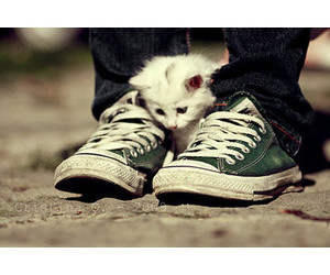 all star, cat, and shoes image