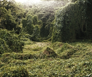 ivy and overgrown image