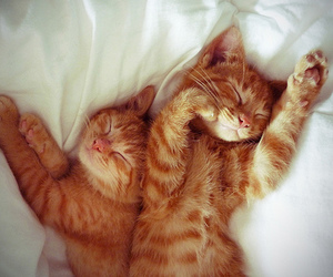 bed, kittens, and sleeping image