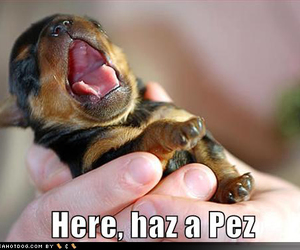 cute animal, lol, and pez image