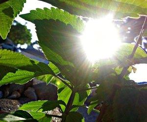 photography, sun shine, and sun shinning image