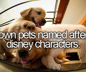 before i die, disney, and puppy image