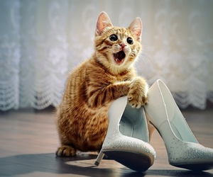 adorable, heels, and animal image