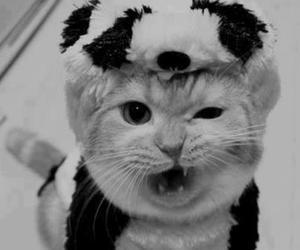cat, panda, and animal image