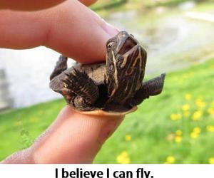 fly, turtle, and believe image