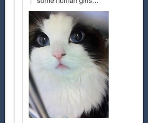 cat, tumblr, and funny image