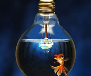 beauty, light bulb, and irony image