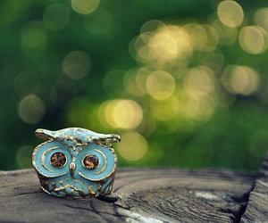 owl and blue image