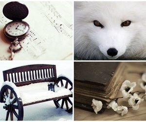 animal, book, and eyes image