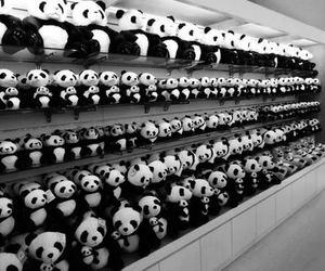 panda and black and white image