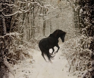 beauty, horse, and forest image