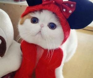 adorable, minnie, and costume cat image
