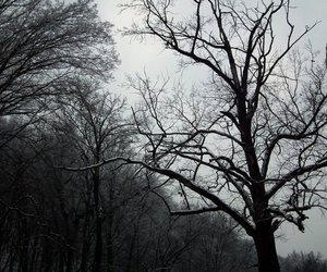 forest, cold, and scary image