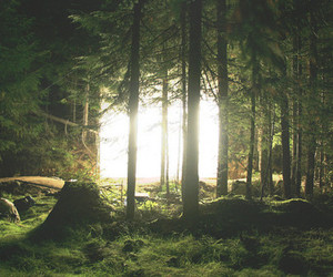 forest, nature, and light image