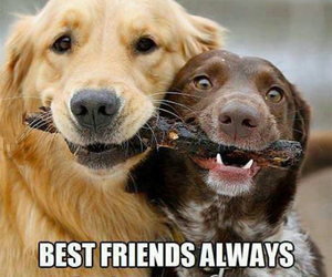 dogs, lol, and funny image
