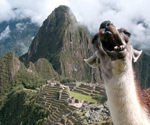 machu picchu and llama image
