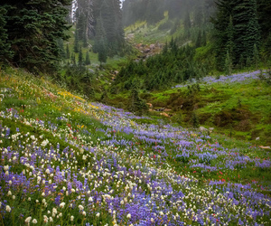 nature, flowers, and forest image