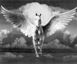horse, black and white, and pegasus image