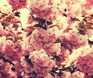 flower, pink, and spring image