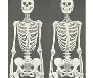 beautiful, ugly, and skeleton image