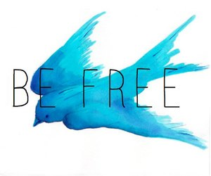 bird, blue, and free image