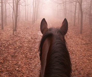 horse, nature, and ride image