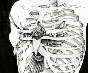 bird, black and white, and bones image