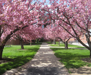 flowers, rochester, and trees image