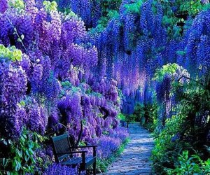 amazing, color, and purple image