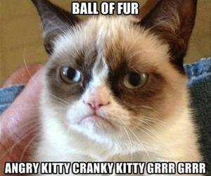 angry, cat, and grumpy cat image