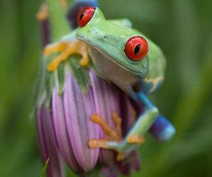 animal, flower, and frog image