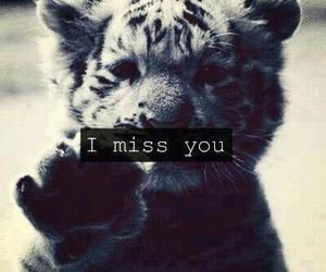tiger, miss, and i miss you image