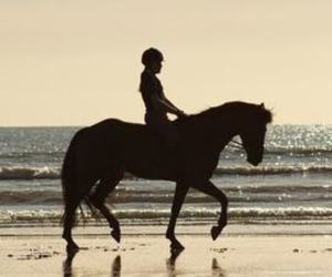 horse, beach, and equestrian image