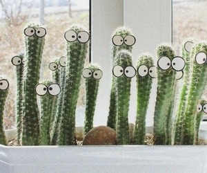cactus, eyes, and funny image