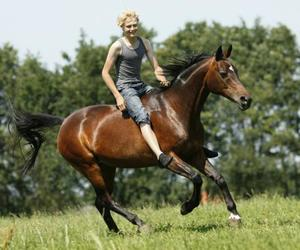 animals, freedom, and riding image