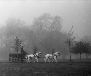 black and white, carriage, and horse image