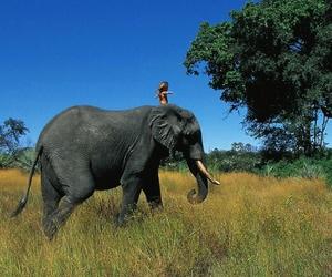 elephant, africa, and nature image