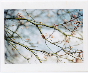 color, flowers, and film image