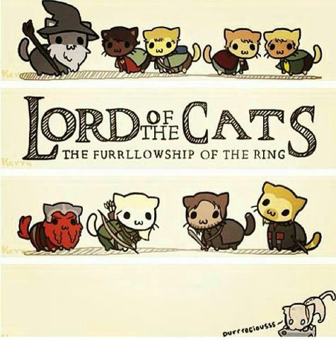 cats, lord of the ring, and cute image