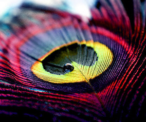 feather, peacock, and colors image
