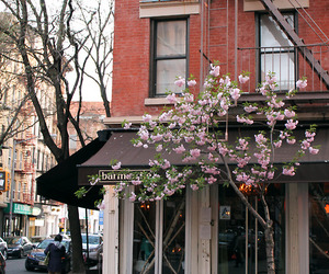 bar, blossom, and cafe image
