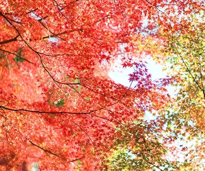 tree, colors, and leaves image