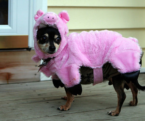 dog, pig, and cute image